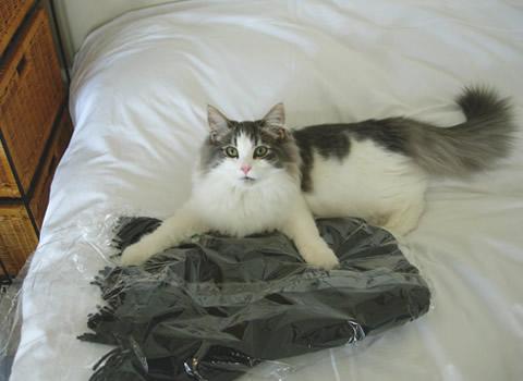 猫写真10