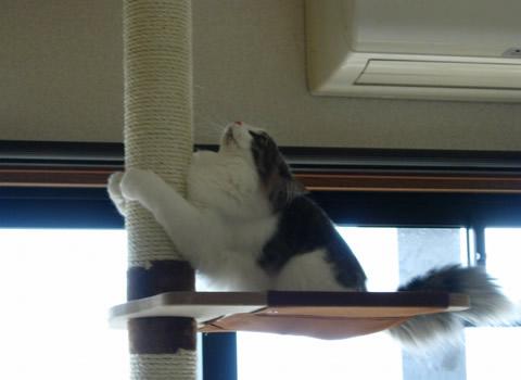 猫写真13