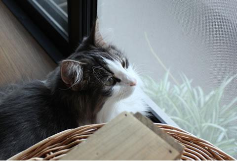 cat photo001