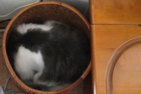 cat photo005