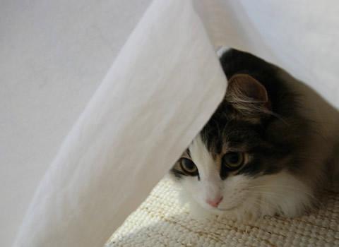cat photo53