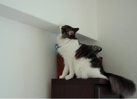 cat photo58