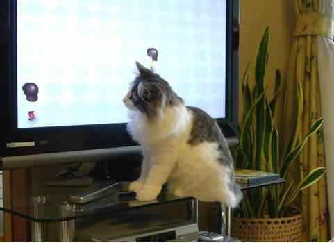 cat photo61
