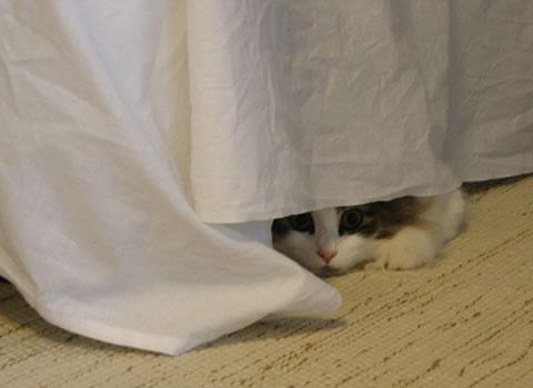 cat photo67
