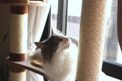 cat photo019