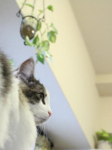 cat photo021
