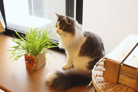 cat photo022