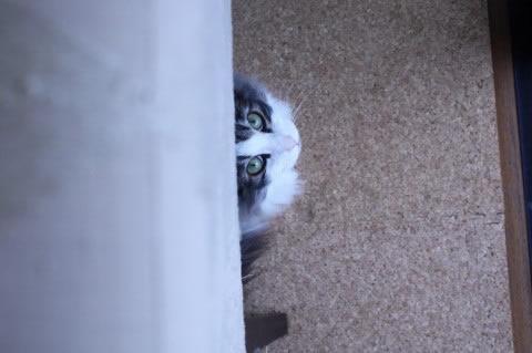 cat photo025