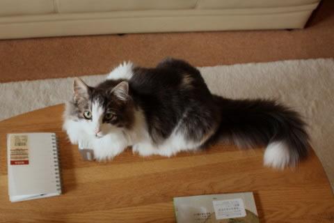 cat photo032