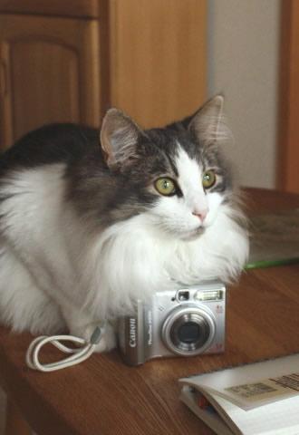 cat photo033