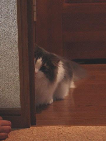 cat photo043