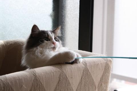 cat photo053