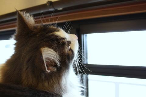 cat photo056