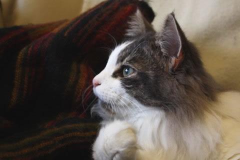 cat photo062