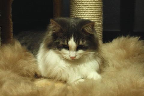 cat photo064