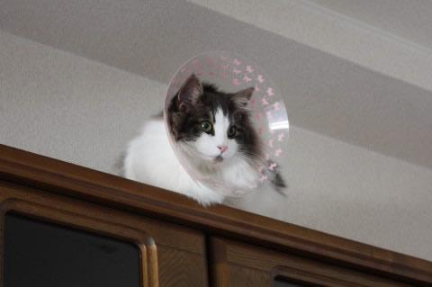 cat photo065