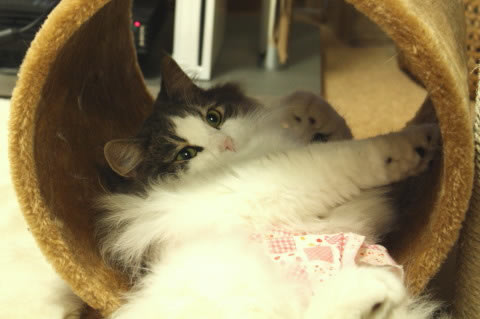 cat photo073