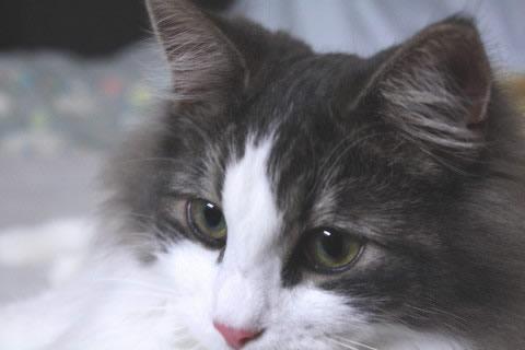 cat photo075