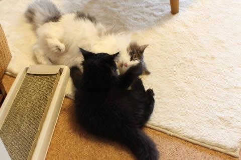 cat photo 004
