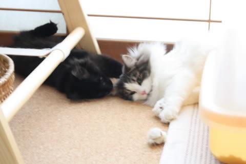 cat photo 014