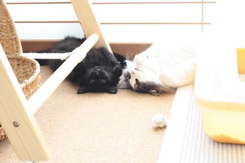 cat photo 016