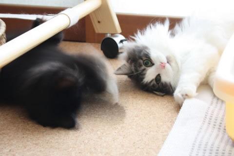 cat photo 017
