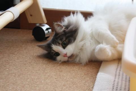 cat photo 018