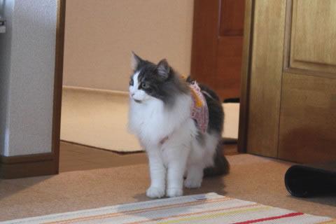 cat photo079