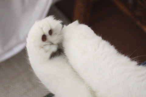 cat photo084