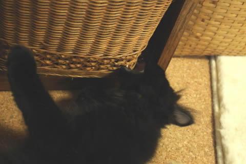 cat photo neo020