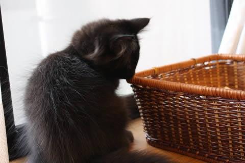 cat photo neo021