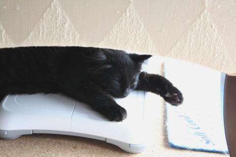 cat photo neo026