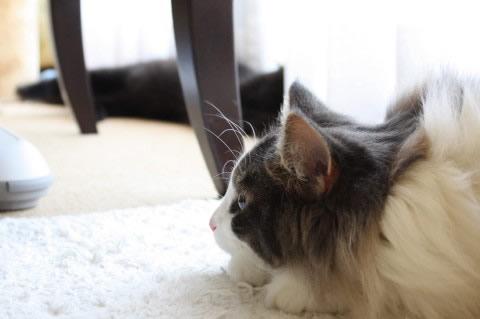cat photo 023