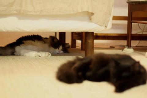 cat photo 037