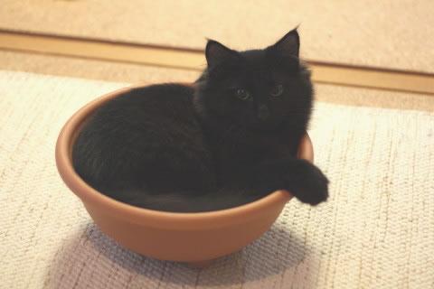 cat photo neo054