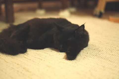 cat photo neo060