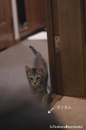 保護猫たびまる08