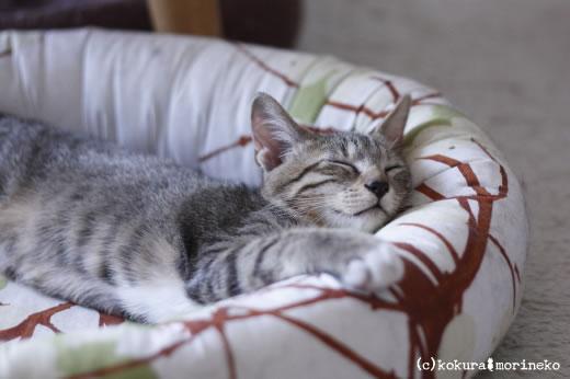 保護猫たびまる17