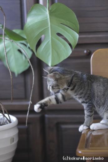 保護猫たびまる21