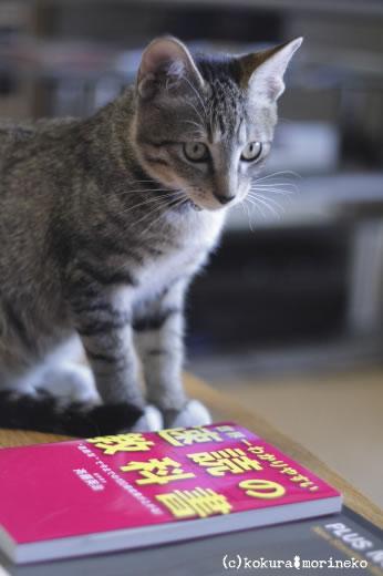 保護猫たびまる22