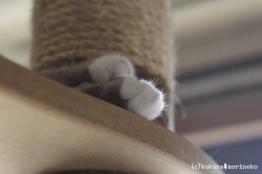 保護猫たびまる28