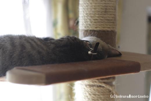 保護猫たびまる29