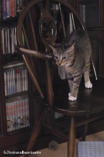 保護猫たびまる36