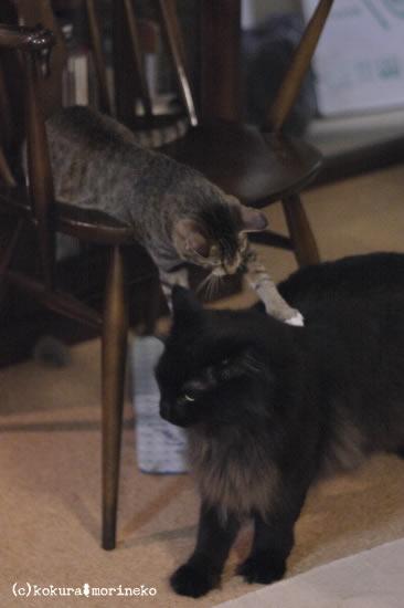 保護猫たびまる37
