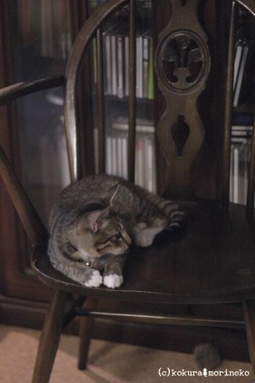 保護猫たびまる39