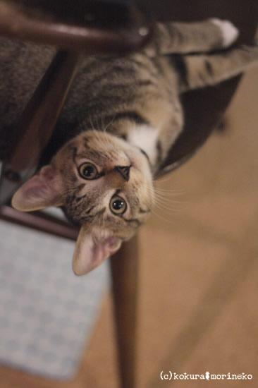 保護猫たびまる40