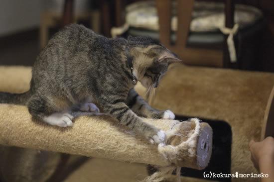 保護猫たびまる43