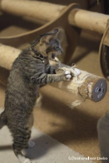 保護猫たびまる45